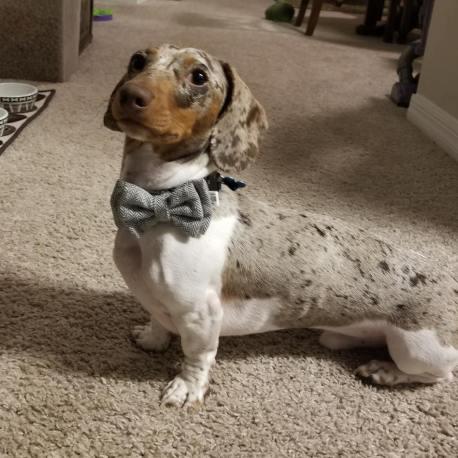 byron bow tie